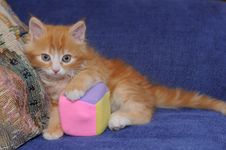 Free Little Cute Kitten With A Toy Stock Images - 19771354