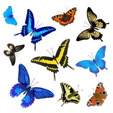 Free Butterfly Set For Design Royalty Free Stock Photo - 19771515