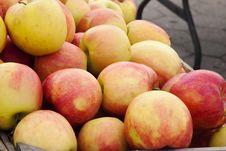 Free Fresh Autumn Apples Stock Photography - 19772672