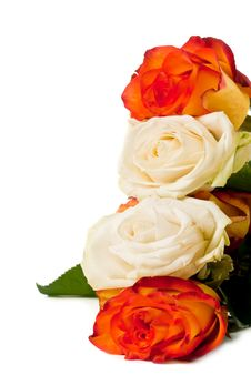Free Roses Stock Image - 19773901