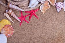 Free Sea Shells Royalty Free Stock Image - 19775906