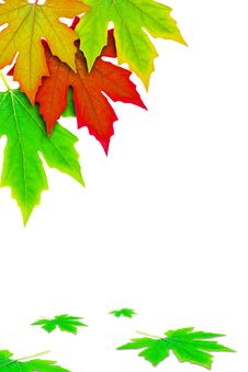 Free Fresh Spring Autumn Leaves Border Royalty Free Stock Image - 19776076