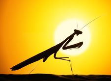 Free Mantids Stock Images - 19776154