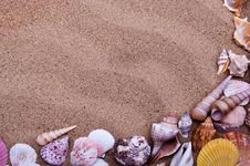 Free Sea Shells Royalty Free Stock Image - 19776186
