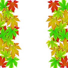 Free Fresh Spring Autumn Leaves Border Stock Photography - 19776202
