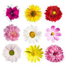 Collection Flowers Stock Photography