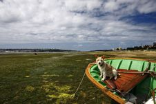 Free Small Boat Aground And Dog Stock Image - 19778741