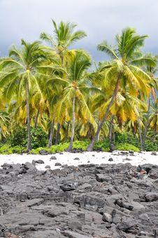 Palm Trees At Puʻuhonua O Hōnaunau Historic Park Royalty Free Stock Images