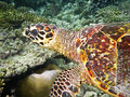 Free Turtle Close Up View Stock Photography - 19781812