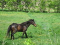 Free Horse In A Pasture Stock Photography - 19782322
