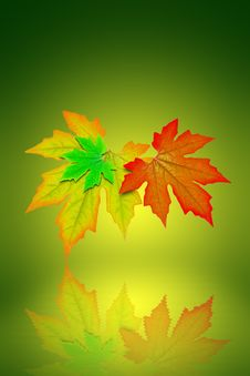 Free Fresh Spring Autumn Leaves Graphic Stock Images - 19780154