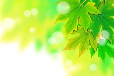 Free Fresh Spring Green Leaves Border Royalty Free Stock Image - 19780206