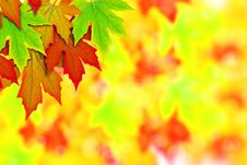 Free Fresh Spring Autumn Leaves Border Stock Images - 19780264