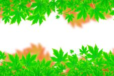 Free Fresh Spring Green Leaves Border Royalty Free Stock Images - 19780389
