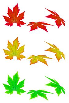Free Fresh Spring Autumn Leaves Stock Image - 19780451