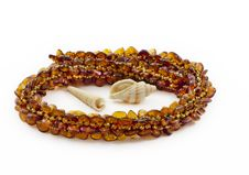 Free Necklace Of Baltic Amber And Shellfish Royalty Free Stock Images - 19780539