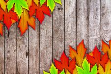 Free Fresh Spring Autumn Leaves Border And Wooden Wall Stock Image - 19780611