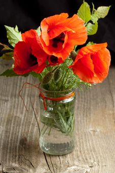 Free Poppy Flower Stock Image - 19781121