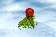 Free Peas And Tomatoes Stock Images - 19781564