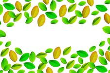 Free Fresh Spring Autumn Leaves Border Stock Images - 19781914