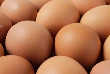 Free Eggs Royalty Free Stock Image - 19782456