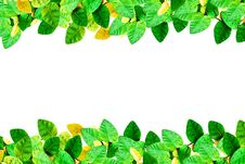 Free Fresh Spring Green Leaves Border Royalty Free Stock Photography - 19782967