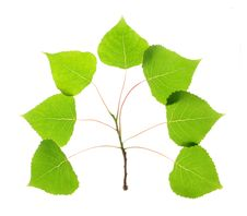 Free Green Leaves Royalty Free Stock Images - 19783009