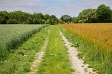 An English Rural Landscape Of Barley And Wheat Royalty Free Stock Photo