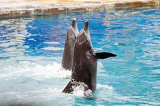 Free Dolphins Swim In The Water Royalty Free Stock Photos - 19784128