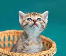 Free Adorable Kitty Royalty Free Stock Photography - 19785917
