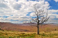 Free Lonely Dying Tree In The Mountains Royalty Free Stock Photography - 19788787