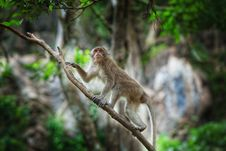 Free Monkey Royalty Free Stock Image - 19789556