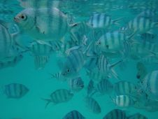 Free Crowded With A Herd Of Sea Fish Royalty Free Stock Images - 19789929