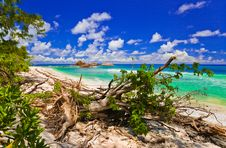 Free Tropical Beach At Seychelles Royalty Free Stock Photography - 19790217