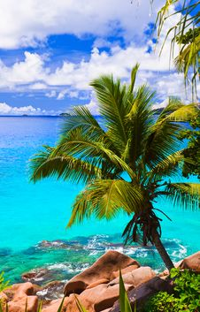 Free Palm On Tropical Beach Royalty Free Stock Photography - 19790327