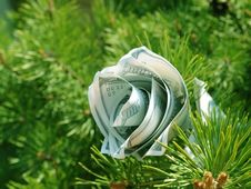 Free Money Flower Cristmas Concept Royalty Free Stock Images - 19790709