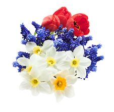 Free Beautiful Spring Bouquet. Stock Photos - 19791353