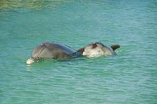 Mother And Baby Dolphin Stock Image