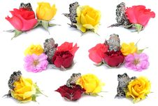 Free Frogs, Flowers Royalty Free Stock Image - 19794706