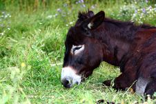 Free A Donkey Stock Photography - 19796632