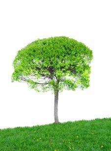 Free Tree On Meadow Stock Image - 19796791