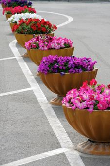 Free Flowers A Petunia. Royalty Free Stock Image - 19796926