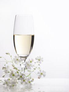 Free Glass Of White Wine Royalty Free Stock Photos - 19797708