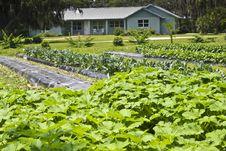 Free Vegetable Farm Stock Photo - 19799410
