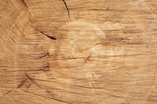 Free Cut Of A Tree Royalty Free Stock Photos - 19799628