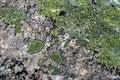 Free Texture Mossy Granite Stock Photography - 1981602