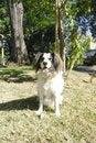Free Mixed Breed Dog Sit Royalty Free Stock Photos - 1982578