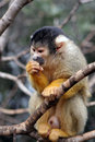 Free Female Monkey Eating The Nuts Stock Image - 1985321