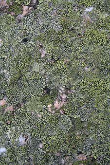 Free Texture Mossy Granite Stock Photos - 1981573