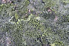 Free Texture Mossy Granite Royalty Free Stock Photo - 1981585